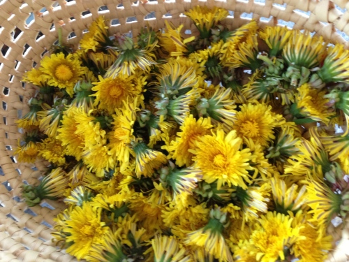 dandelion blossoms in a basket